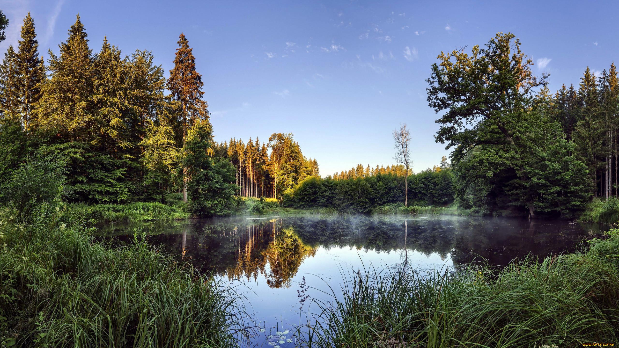 природа, реки, озера, осень, пруд, туман